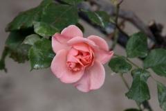 Euroflora_Susi_5mag2018_1566c_rid
