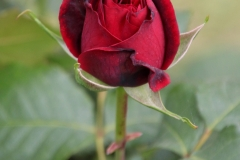 Euroflora_Susi_5mag2018_1586c_rid