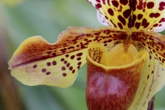 Orchidee_12feb2021_8965c2-rid