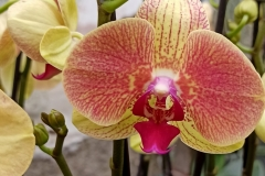 Orchidee_12feb2021_Sm_121915c-rid