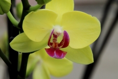 Orchidee_12feb2021_8997_1c-rid