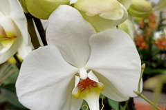 Orchidee_12feb2021_Sm_122042c-rid