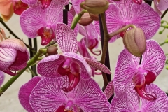 Orchidee_12feb2021_Sm_122600c-rid