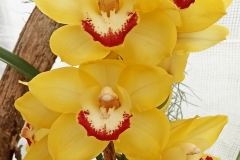 Orchidee_12feb2021_Sm_122625c-rid