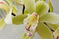 Orchidee_12feb2021_Sm_122648c-rid