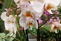 Orchidee_12feb2021_Sm_122915c-rid