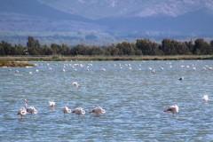 Sardegna_24set2019_5622c_SenaArrubia_fenicotteri-rid