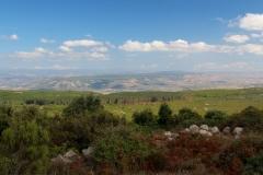 Sardegna_27set2019_5926c_MonteArci_PinetaIsBenas-rid