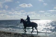 Sardegna_24set2019_8709c_fotoSusanna_MarinaArborea_spiaggia-cavalli-rid