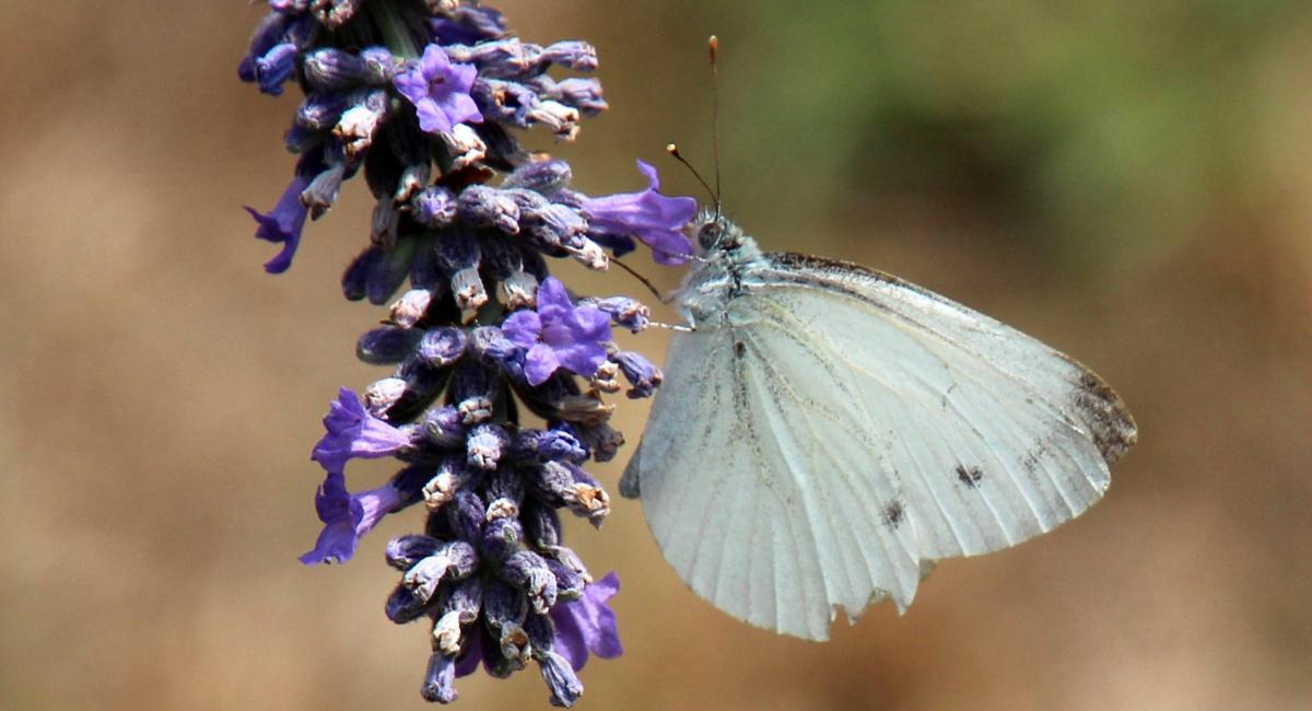 """le farfalle ed il """"Photo Contest"""" con mia moglie…"""